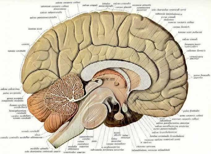Transmittersubstanzen, Rezeptoren und Verhalten